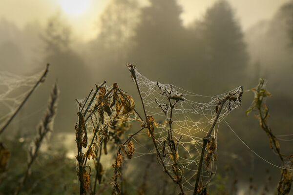 Павуцінкі пачалі зіхацець у цёплым паветры.  - Sputnik Беларусь