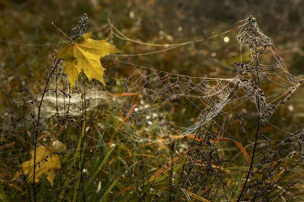 Імглісты восеньскі ранак зайграў кветкамі і малюнкамі сапраўднага бабінага лета. - Sputnik Беларусь