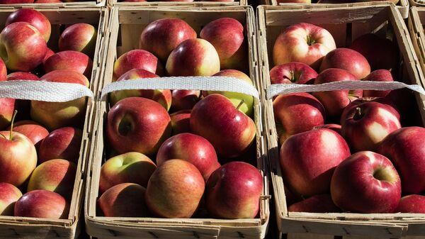 Яблоки в упаковке - Sputnik Беларусь