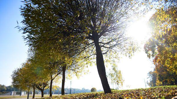 Теплая осень в октябре в Гомеле - Sputnik Беларусь