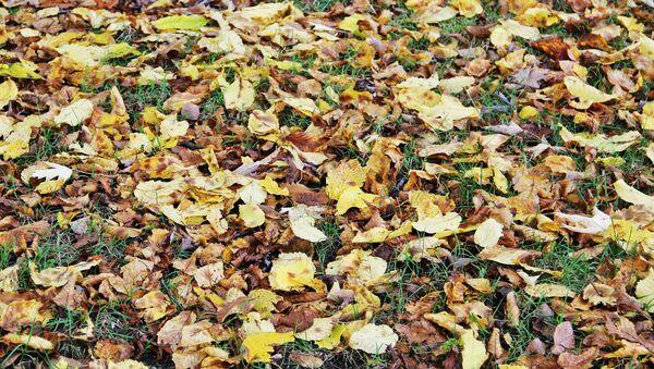 Восеньскае лісце, архіўнае фота - Sputnik Беларусь