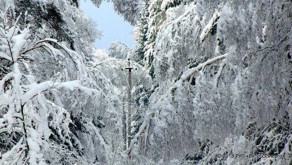 Лінія ЛЭП пасля снегападу - Sputnik Беларусь