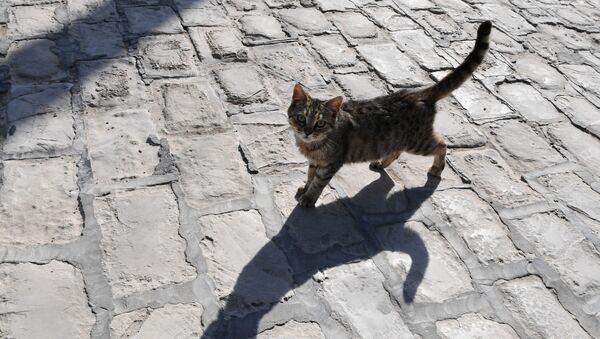 Кошка на улице - Sputnik Беларусь