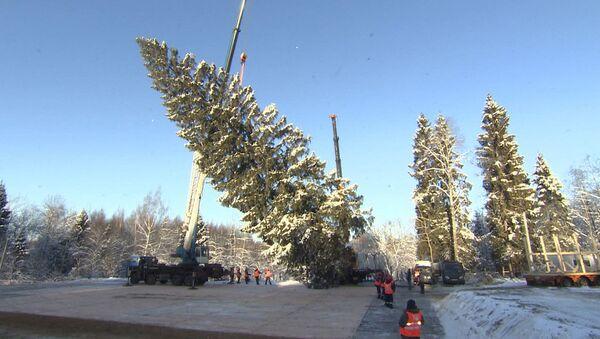 Главная елка России - Sputnik Беларусь