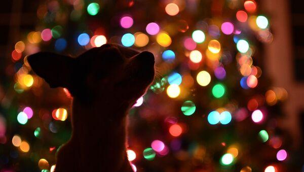 Собака у новогодней елки, архивное фото  - Sputnik Беларусь