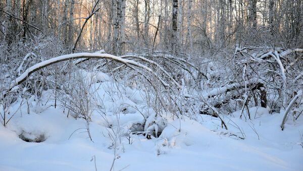 Зимний лес, архивное фото - Sputnik Беларусь