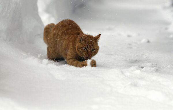 Кот гуляе са снегам - Sputnik Беларусь