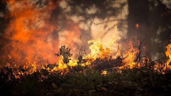 Лесной пожар, архивное фото - Sputnik Беларусь