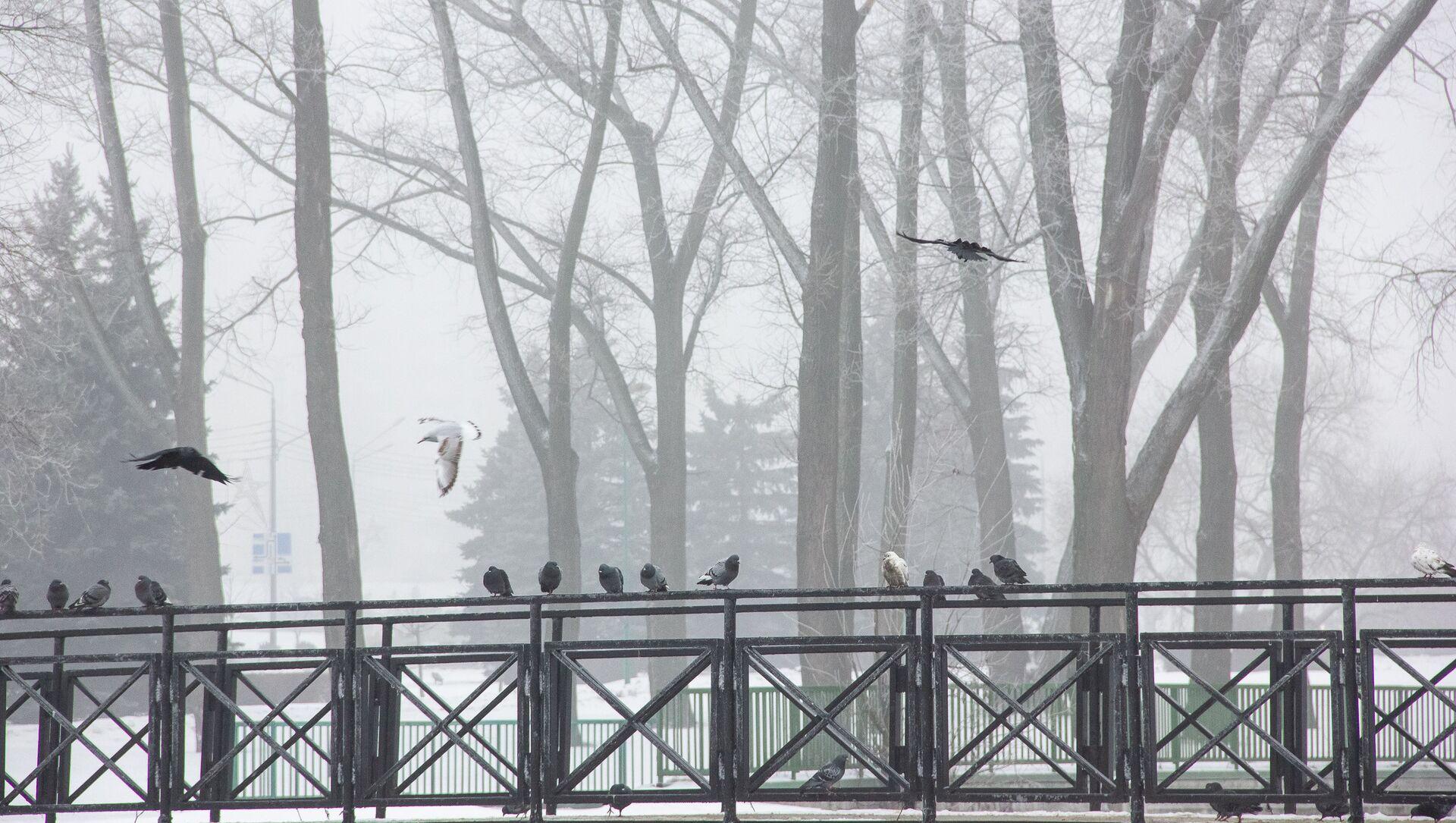 Туман у мінскім парку - Sputnik Беларусь, 1920, 23.02.2021