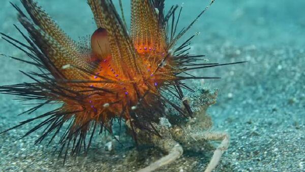 Краб украл морского ежа из-под носа у дайвера - Sputnik Беларусь