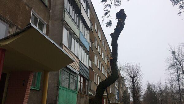 Еще совсем недавно это бревно было плакучей ивой - Sputnik Беларусь