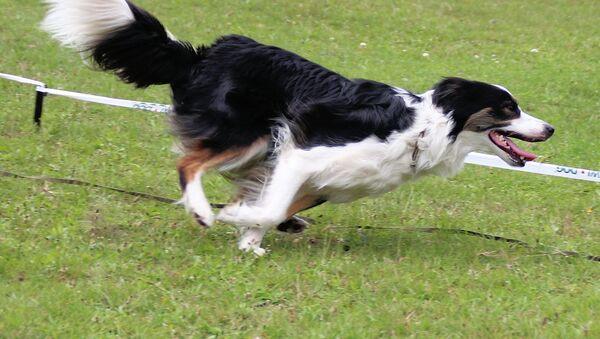 Собака после прыжка - Sputnik Беларусь