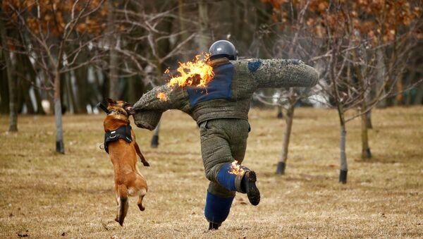 Ударым прабегам: Дзень стварэння ўнутраных войскаў адзначылі ў Лошыцы - Sputnik Беларусь