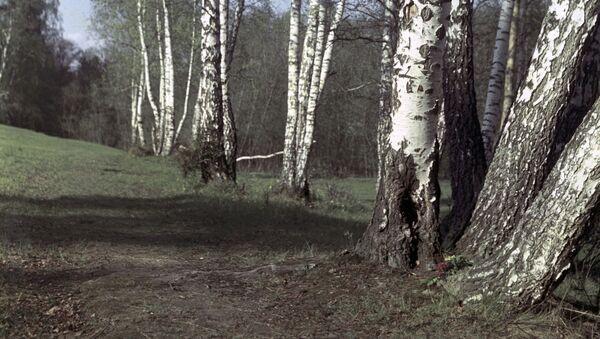 Ранней весной в лесу - Sputnik Беларусь