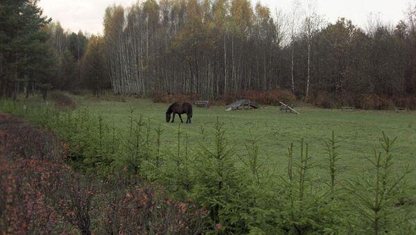 Каня ў нацыянальным парку, архіўна фота - Sputnik Беларусь