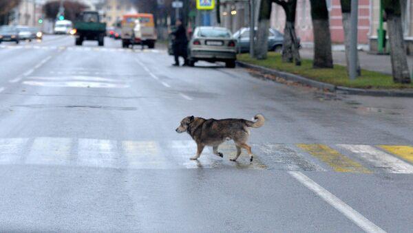 Жизнь в маленьком городе - Sputnik Беларусь