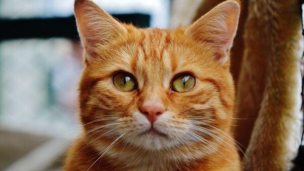 Рыжий кот - Sputnik Беларусь