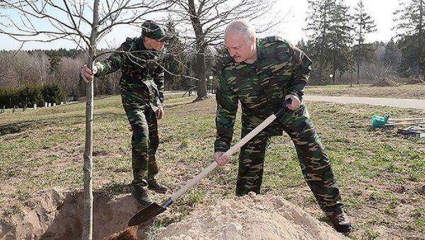Александр Лукашенко посадил деревья на Линии Сталина во время субботника - Sputnik Беларусь