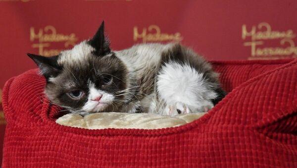 Сярдзітая кошка, архіўнае фота - Sputnik Беларусь