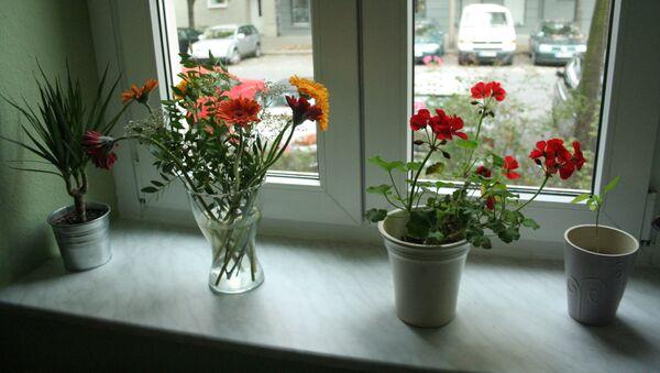 Цветы на окне, архивное фото - Sputnik Беларусь