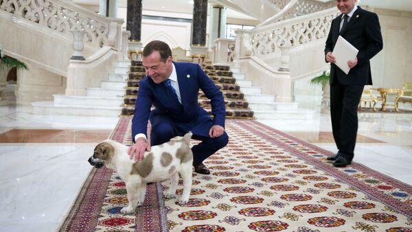 Гурбангулы Бердымухамедов подарил Дмитрию Медведеву щенка алабая - Sputnik Беларусь