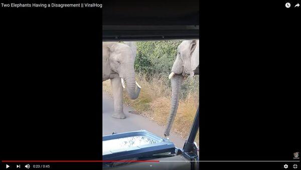 Выглядит опасно: туристы сняли на видео битву слонов - Sputnik Беларусь
