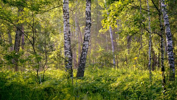 Летний лес, архивное фото - Sputnik Беларусь