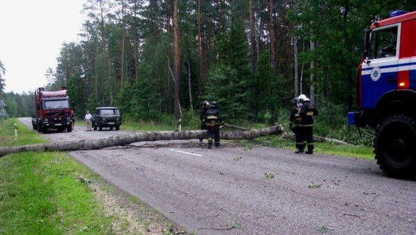 Последствия ветра в Беларуси 1 июля - Sputnik Беларусь