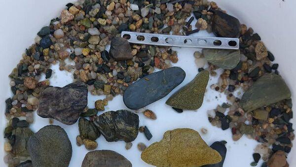 Пластина, найденная в желудке крокодила - Sputnik Беларусь