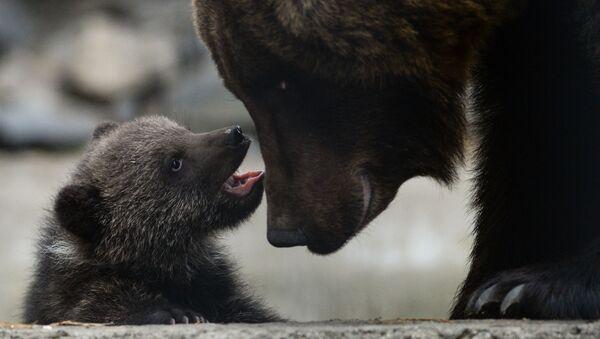 Бурый медвежонок - Sputnik Беларусь