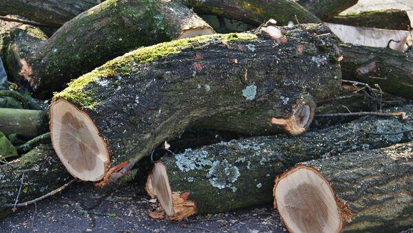 Стволы срубленных деревьев - Sputnik Беларусь