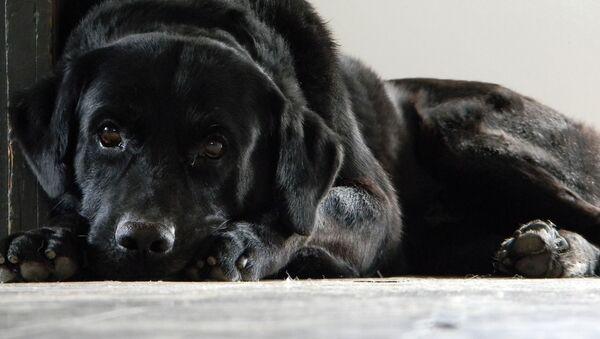 Собаке сложно объяснить, что поставщик ждет новой партии и не возвращает деньги - Sputnik Беларусь