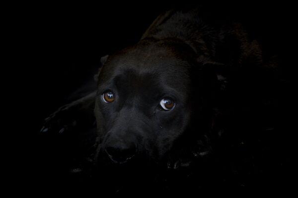 Аластин, пятилетний пес, в приюте для бездомных животных - Sputnik Беларусь