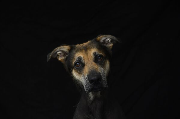 Хума, 5-летний пес - Sputnik Беларусь
