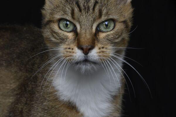 Зоя, 14-летняя бездомная кошка - Sputnik Беларусь