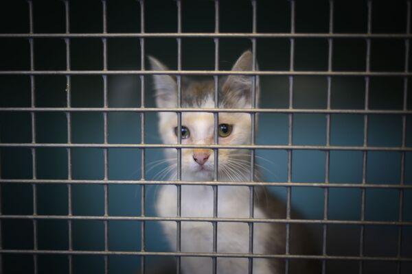 Брошенный котенок в клетке приюта для животных Общества защиты животных в Женевилье, пригороде Парижа - Sputnik Беларусь