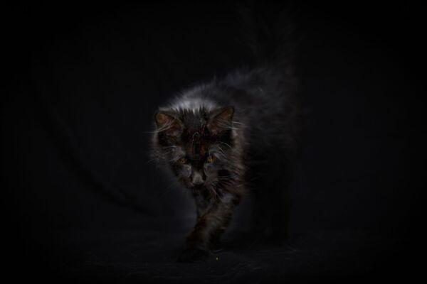 Слепой пятимесячный котенок Нуакея оказался на улице - Sputnik Беларусь
