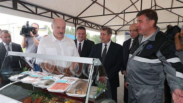 Лукашэнка прадэгуставаў беларускую чырвоную ікру і вэнджаную фарэль - Sputnik Беларусь