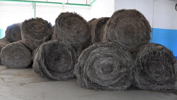 Собранный с полей лен в рулонах дожидается переработки - Sputnik Беларусь