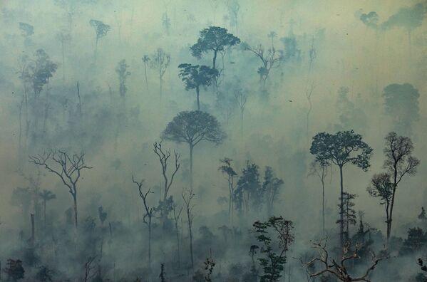 Вид на природные пожары в лесах Амазонии, Бразилия  - Sputnik Беларусь