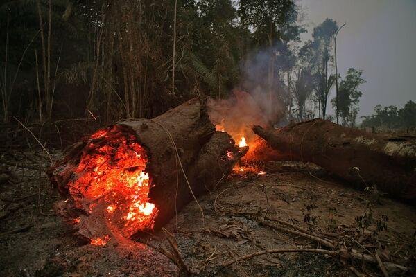 Горящий ствол дерева в тропических лесах Амазонии - Sputnik Беларусь
