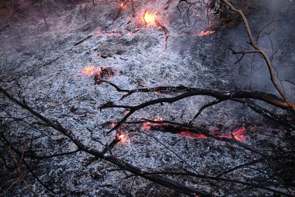 Горящие ветки во время пожара в лесах Амазонии  - Sputnik Беларусь