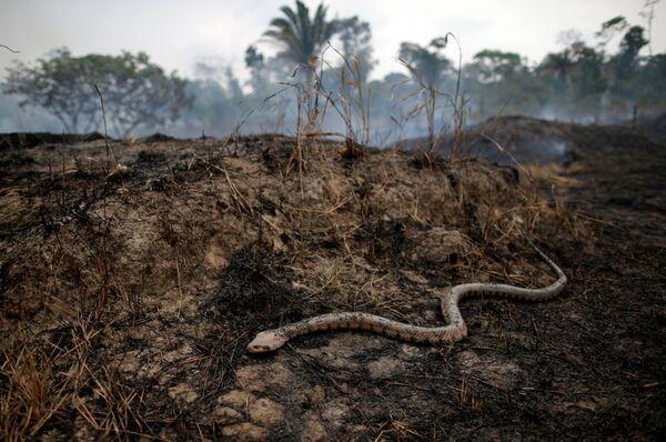 Последствия пожаров в бразильской Амазонии - Sputnik Беларусь