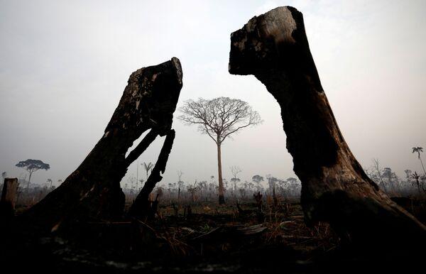 Сгоревшие деревья во время природного пожара в Амазонии  - Sputnik Беларусь