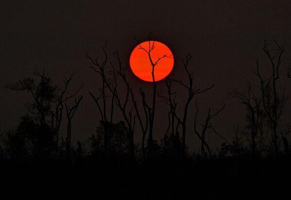 Заход солнца над выжженным лесом в бразильской Амазонии - Sputnik Беларусь