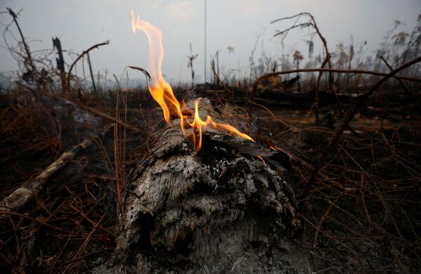 Урочище джунглей Амазонки после пожара в Бока-ду-Акре, штат Амазонас, Бразилия - Sputnik Беларусь