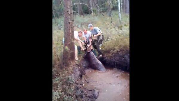 Волковысские охотники за рога вытащили из болота оленя - Sputnik Беларусь