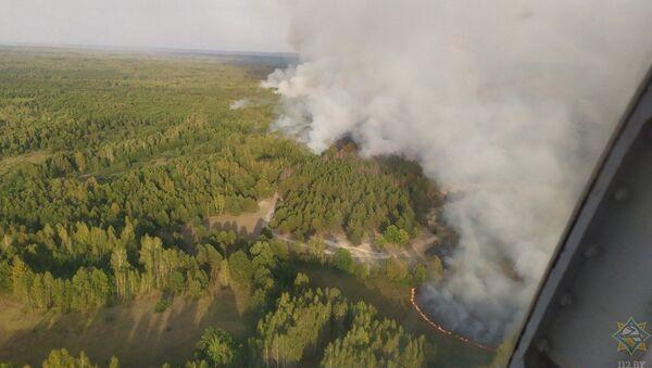Лесной пожар в Хойникском районе - Sputnik Беларусь
