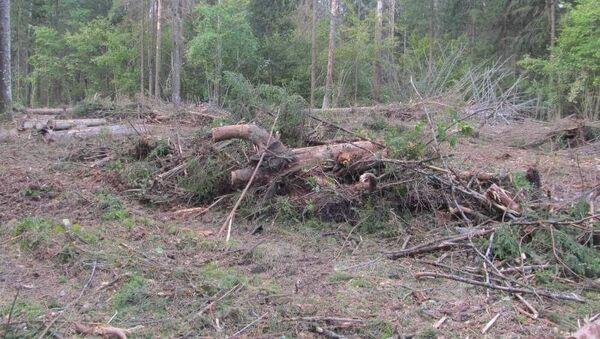 Заготовка леса в Могилевской области, где погиб мужчина - Sputnik Беларусь