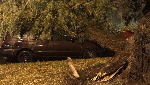 В Бресте сильный ветер повалил деревья - Sputnik Беларусь